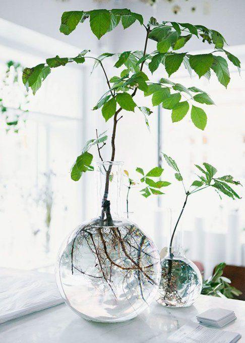 Déco-plantes-tendance2017