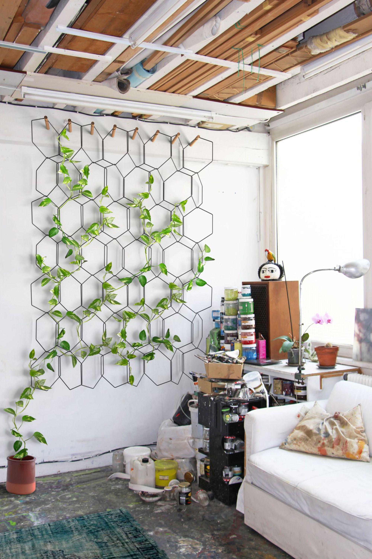 plante-grimpante-vigne-d-appartement