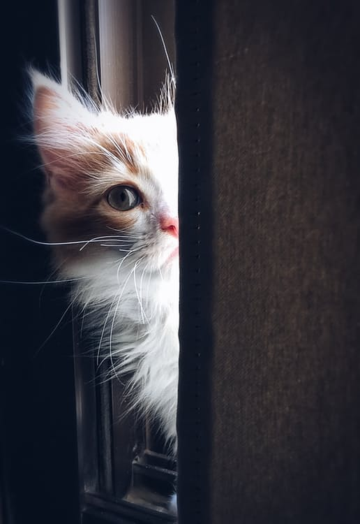 Comment décorer son intérieur quand on a un chat ?