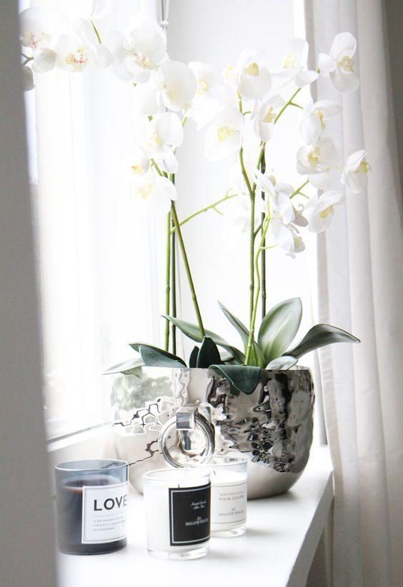 plantes vertes orchidée