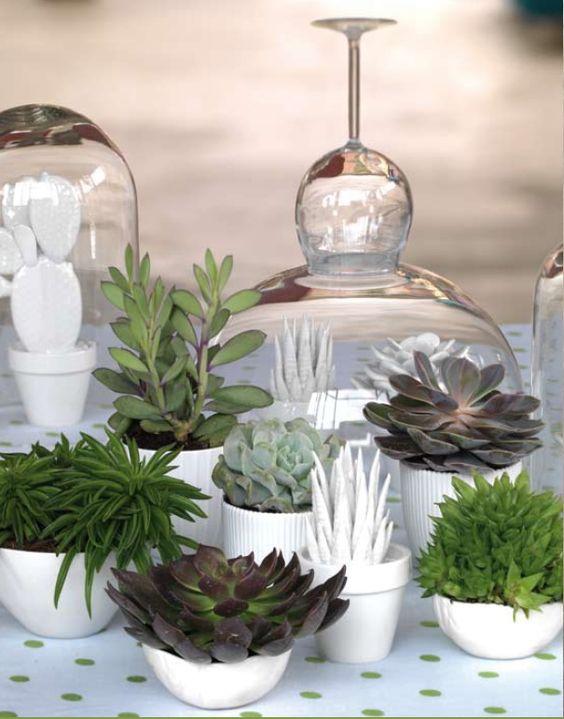 mini plantes