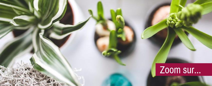greenterior-comment-creer-une-deco-vegetale