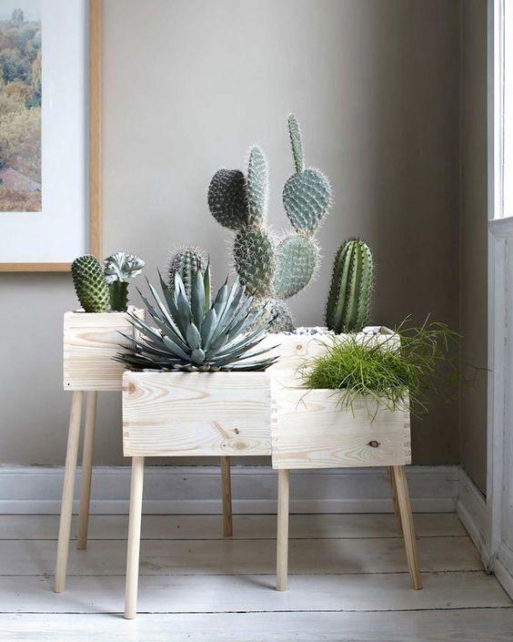 deco couleur tendance cactus greenpower